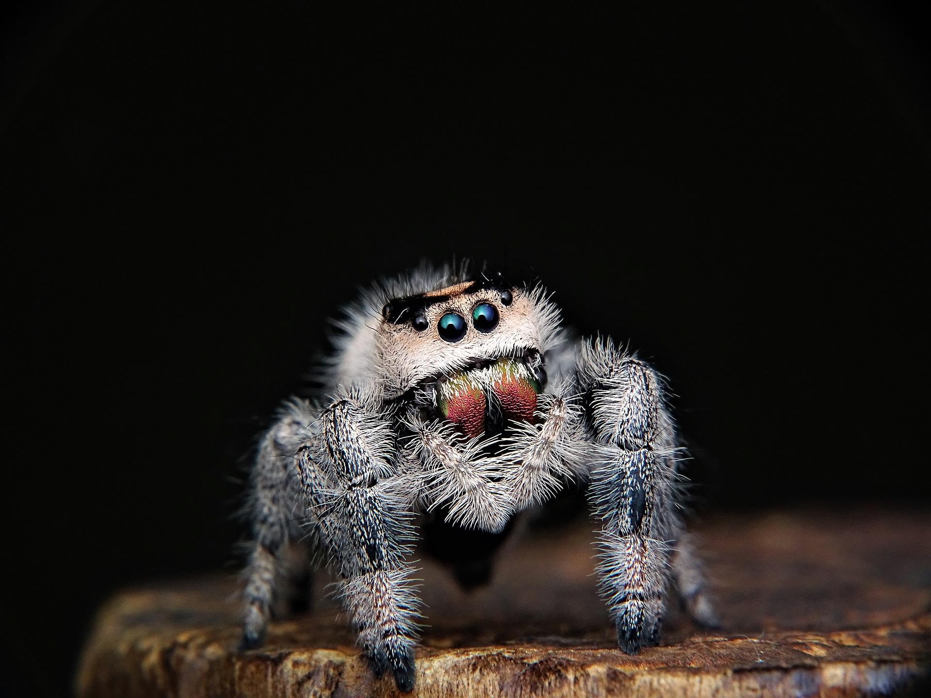 spider-3022078_1920